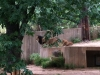 national-zoo-lions-2